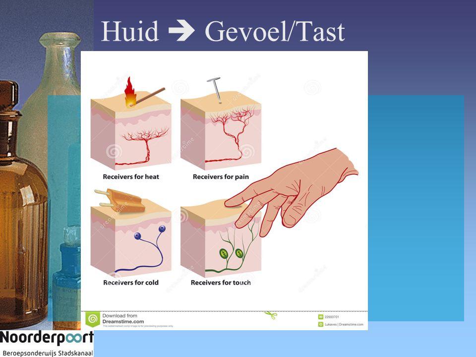 Huid  Gevoel/Tast