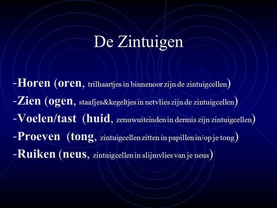 De Zintuigen Horen (oren, trilhaartjes in binnenoor zijn de zintuigcellen) Zien (ogen, staafjes&kegeltjes in netvlies zijn de zintuigcellen)