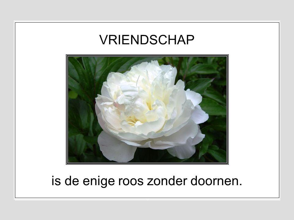is de enige roos zonder doornen.