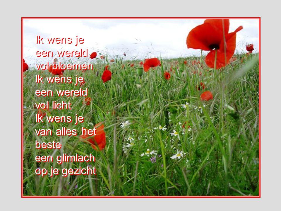 Ik wens je een wereld vol bloemen Ik wens je een wereld vol licht Ik wens je van alles het beste een glimlach op je gezicht