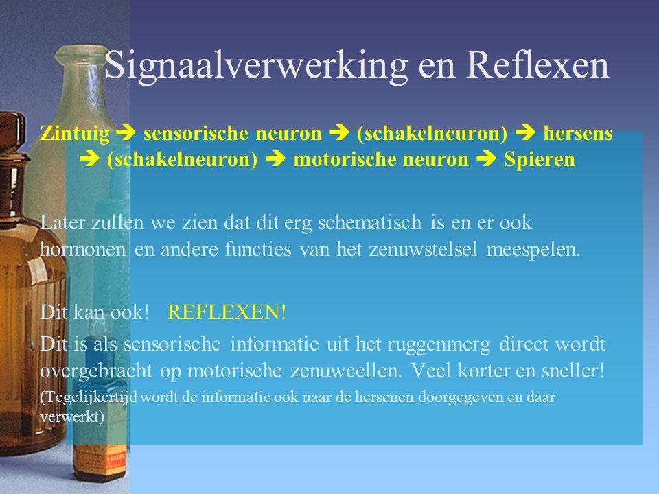 Signaalverwerking en Reflexen