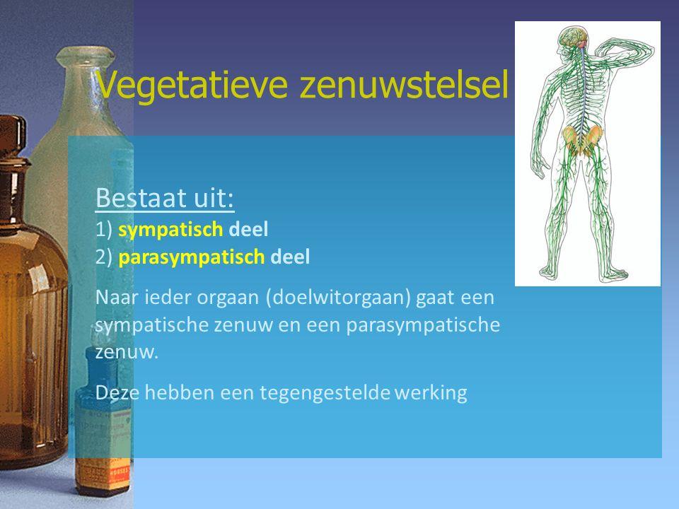 Vegetatieve zenuwstelsel