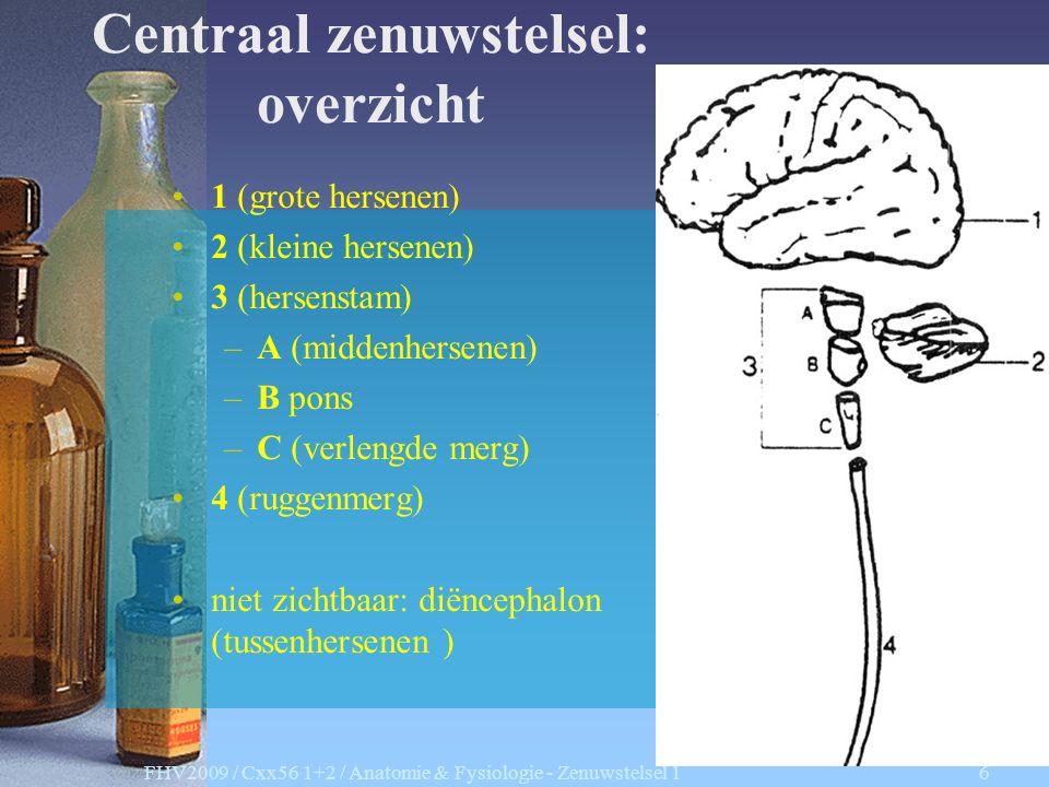 Centraal zenuwstelsel: overzicht