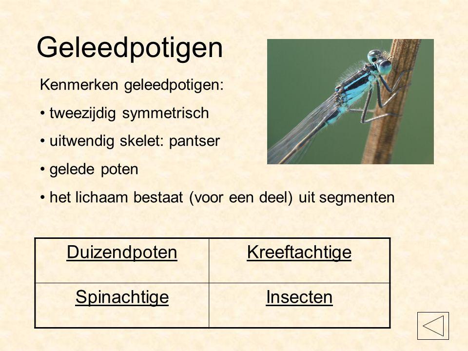 Geleedpotigen Duizendpoten Kreeftachtige Spinachtige Insecten