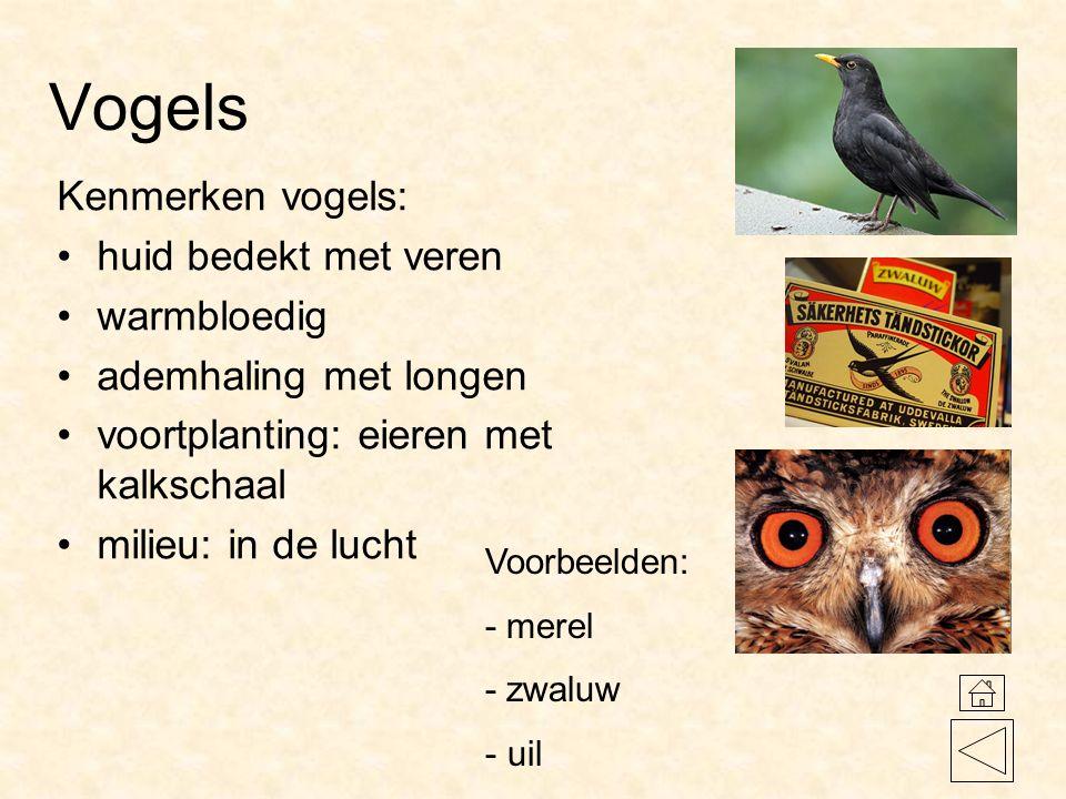 Vogels Kenmerken vogels: huid bedekt met veren warmbloedig