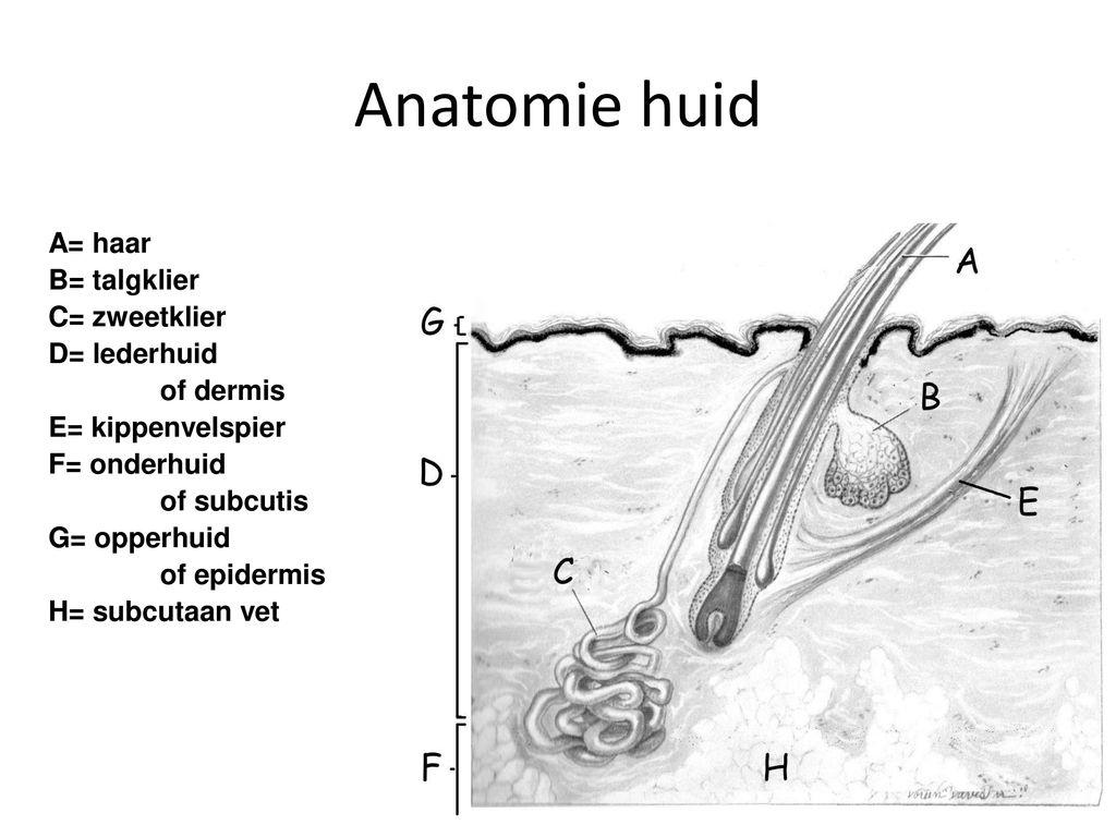 Nett Haar Diagramm Anatomie Zeitgenössisch - Anatomie Ideen ...