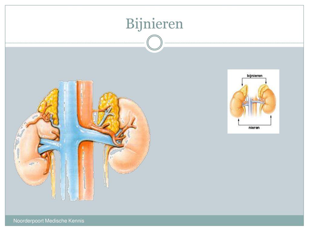 weinig plassen nieren