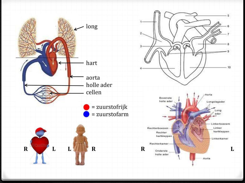 Fantastisch Anatomie Der Hölle Bilder - Anatomie Ideen - finotti.info