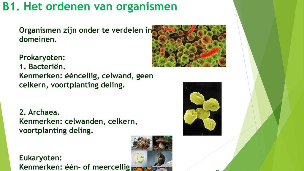 B1. Het ordenen van organismen