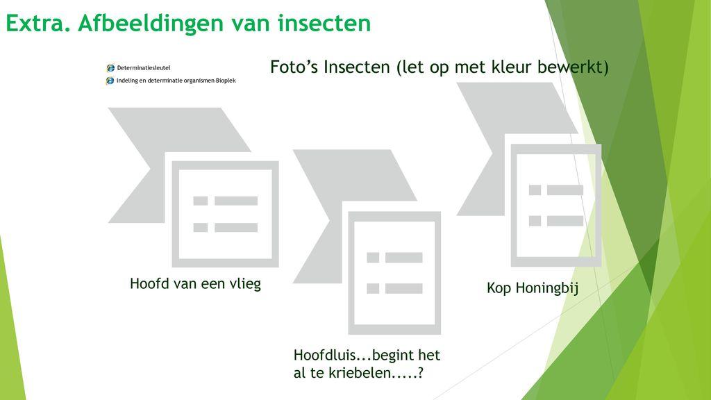 Extra. Afbeeldingen van insecten