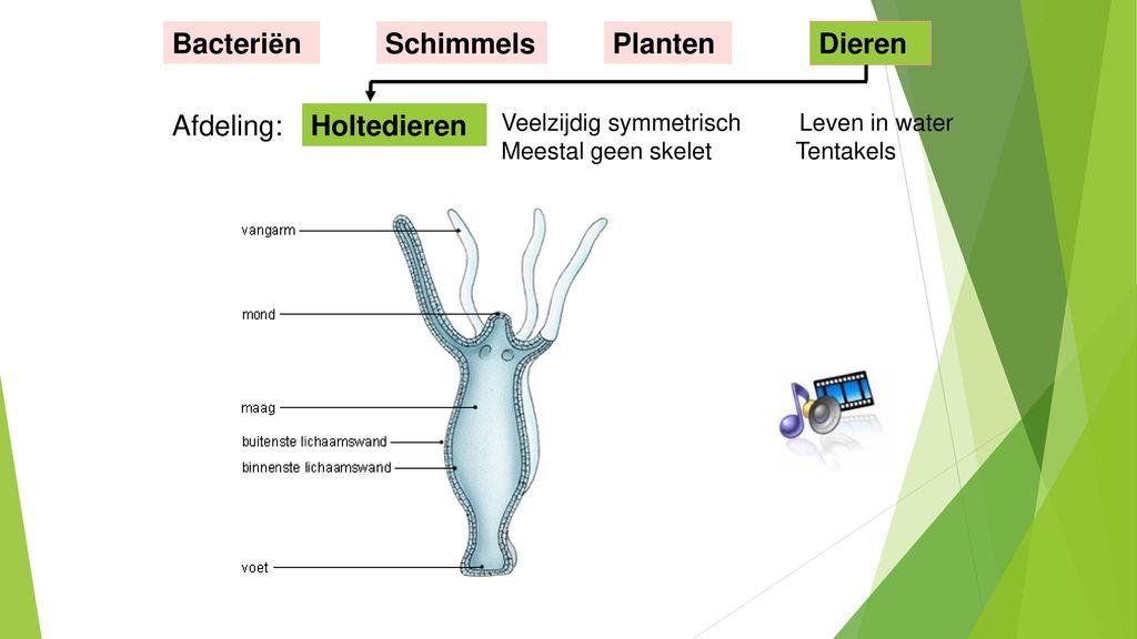 Bacteriën Schimmels Planten Dieren Afdeling: Holtedieren