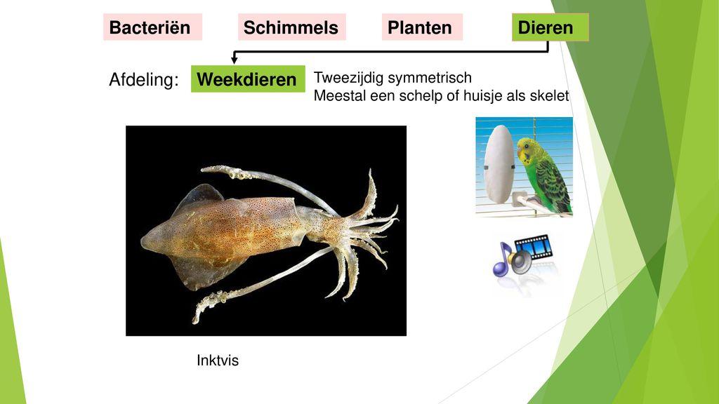 Bacteriën Schimmels Planten Dieren Afdeling: Weekdieren