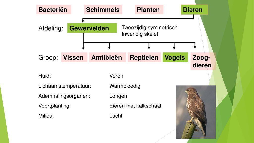 Bacteriën Schimmels Planten Dieren Afdeling: Gewervelden Groep: Vissen