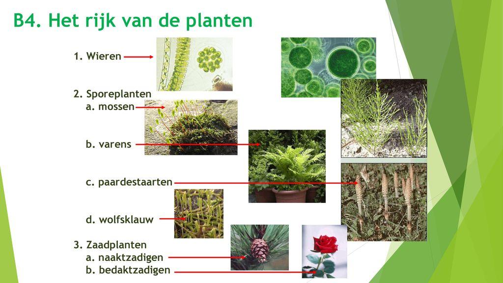 B4. Het rijk van de planten