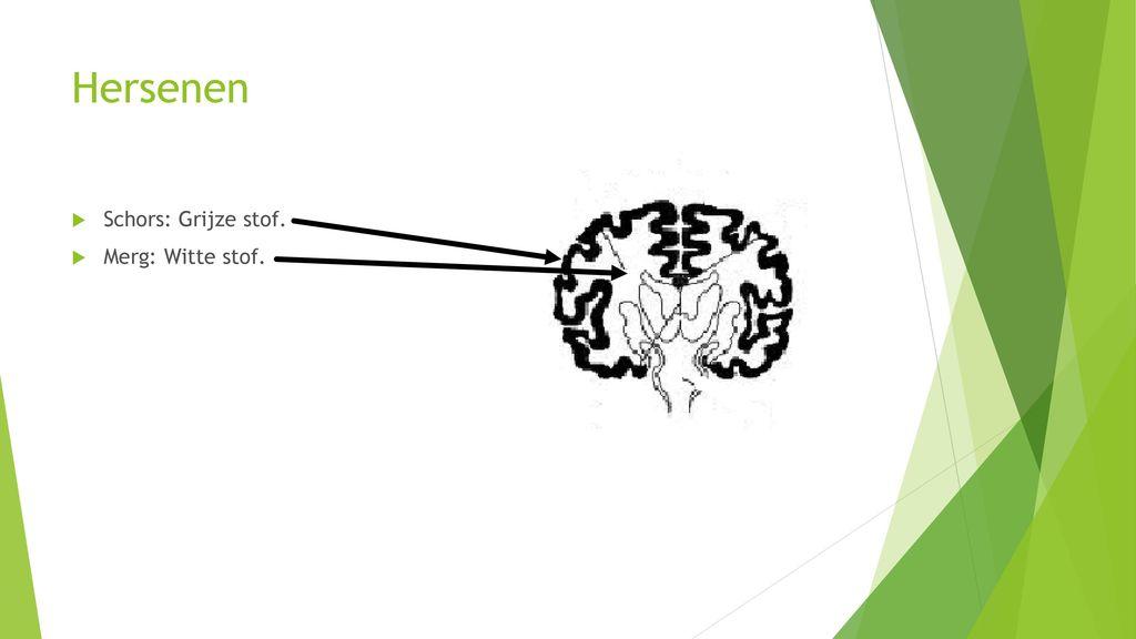 grijze stof hersenen