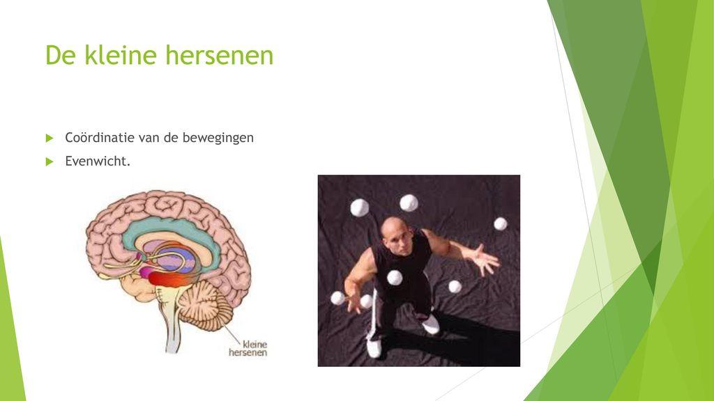 bewegen hersenen
