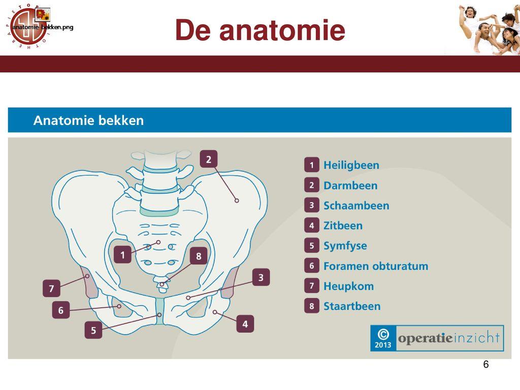 Ziemlich Anatomie Und Physiologie Des Diabetes Mellitus Typ 2 ...