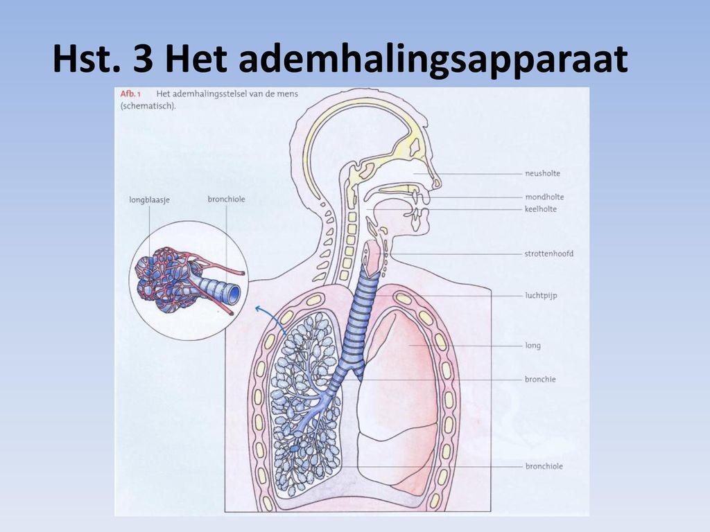 Großzügig Anatomie Des Fetusschädeln Bilder - Anatomie Ideen ...