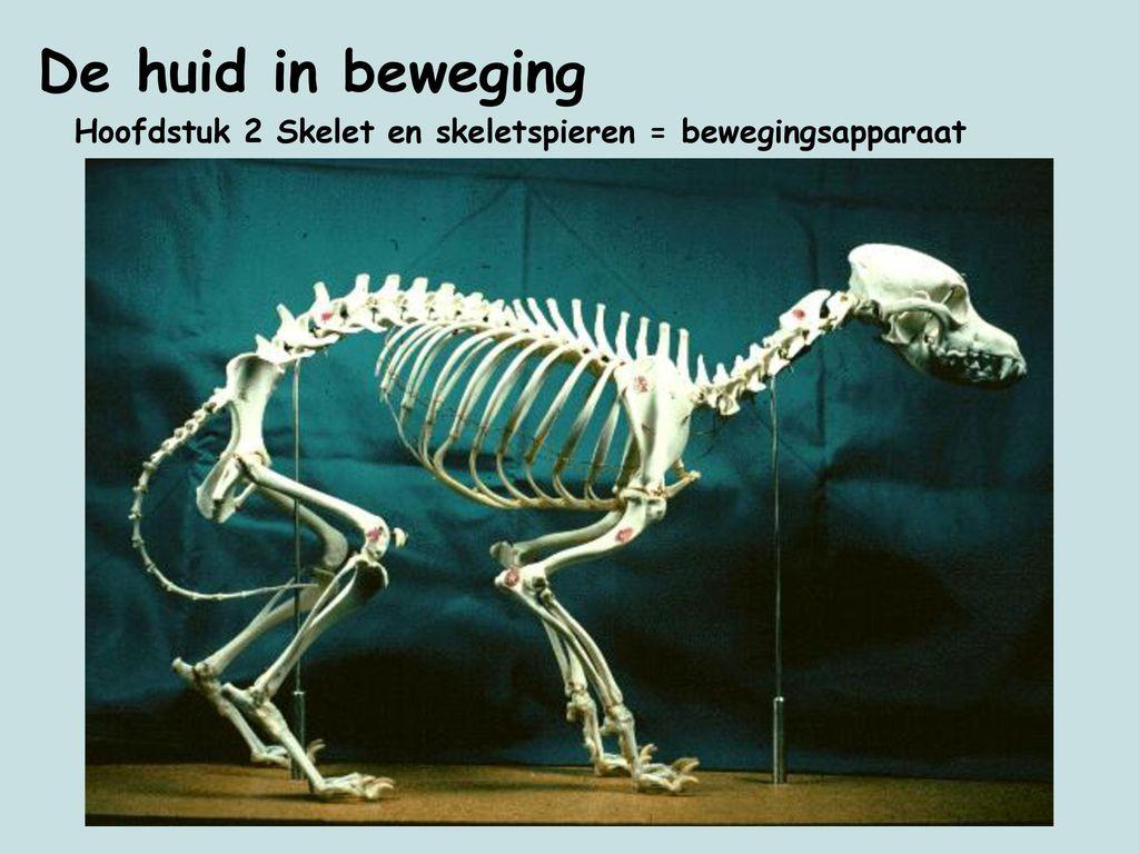 Hoofdstuk 2 Skelet en skeletspieren = bewegingsapparaat