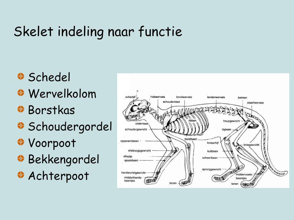 Skelet indeling naar functie