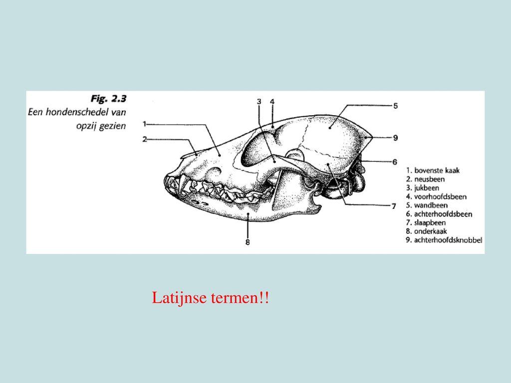 Maxillare, nasale, zygomaticus, frontale, parietale, occipitale, temporale, mandibulare, protuberantia occipitalis extena