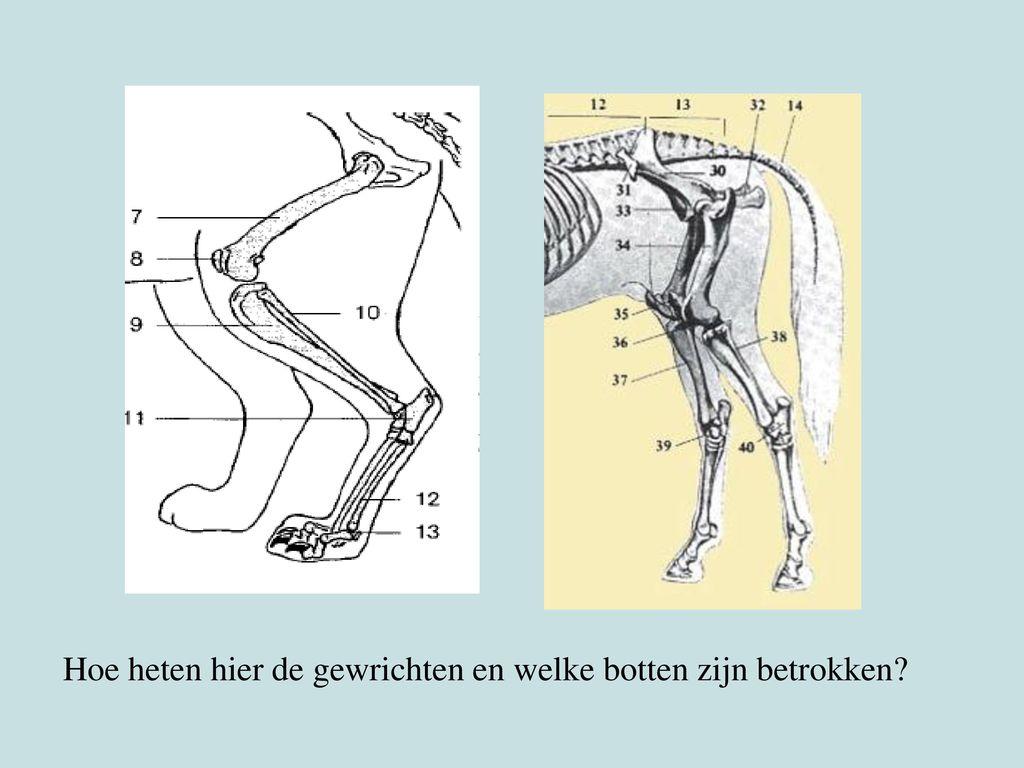 Hoe heten hier de gewrichten en welke botten zijn betrokken