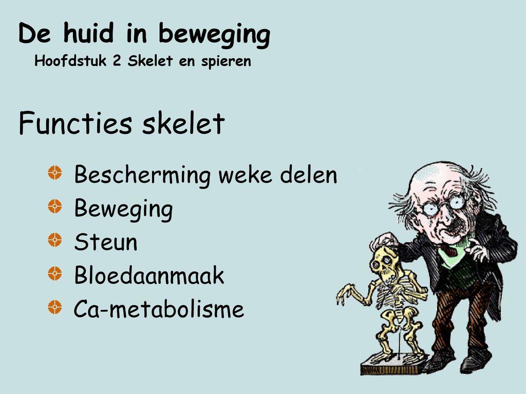 Functies skelet De huid in beweging Bescherming weke delen Beweging