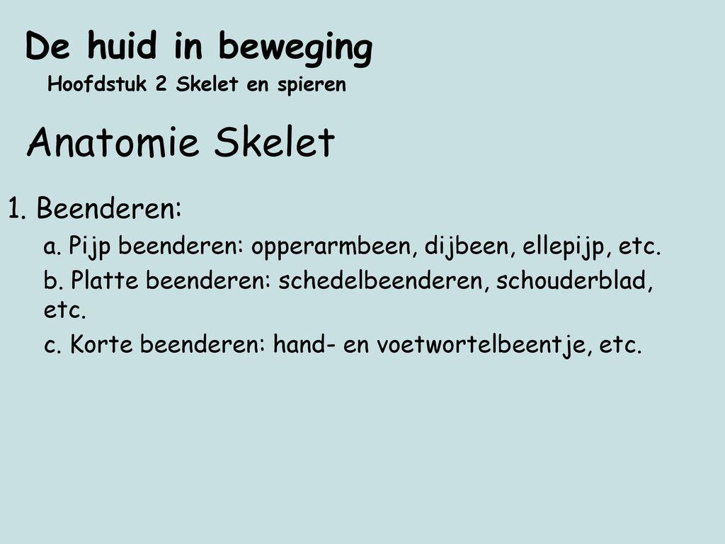 Anatomie Skelet De huid in beweging 1. Beenderen: