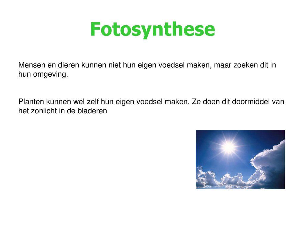 Fotosynthese Mensen en dieren kunnen niet hun eigen voedsel maken, maar zoeken dit in hun omgeving.