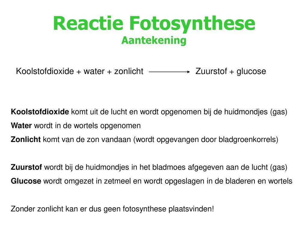 Reactie Fotosynthese Aantekening