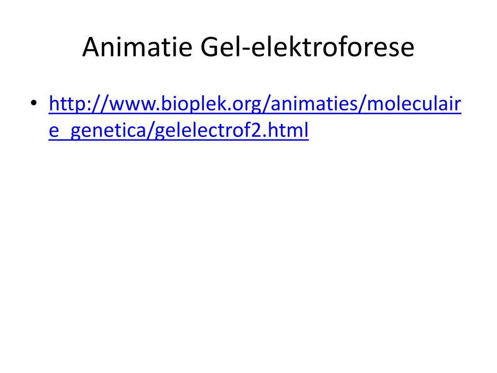Animatie Gel-elektroforese