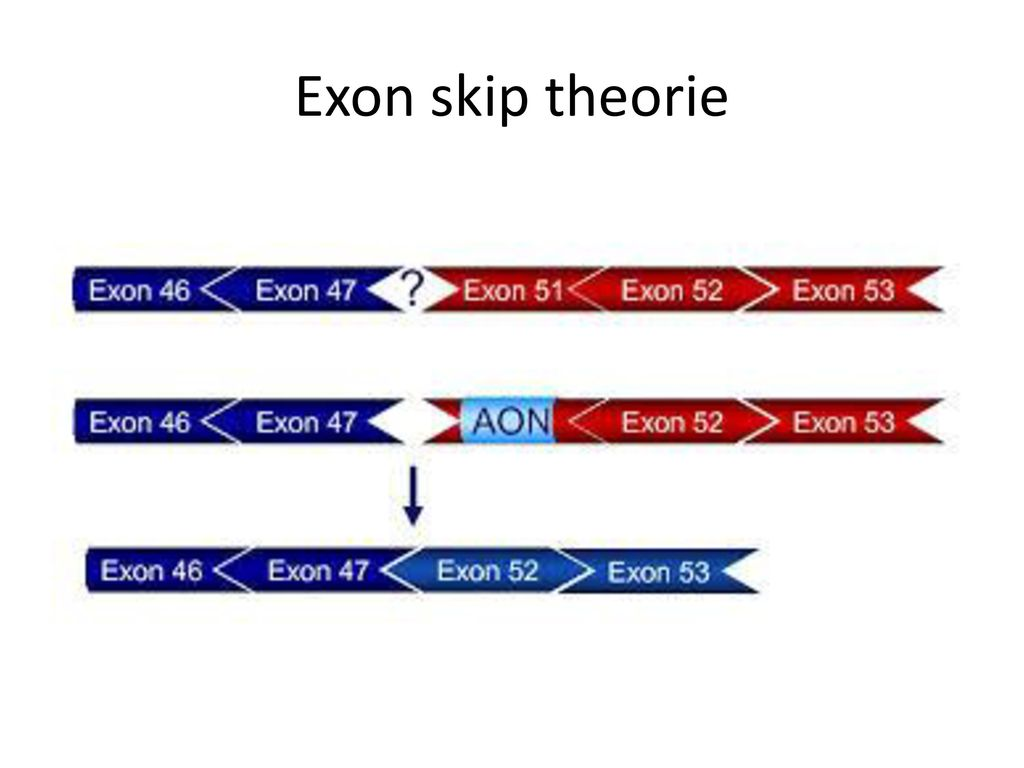 Exon skip theorie