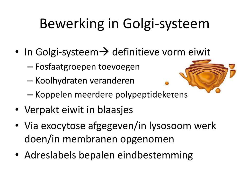Bewerking in Golgi-systeem