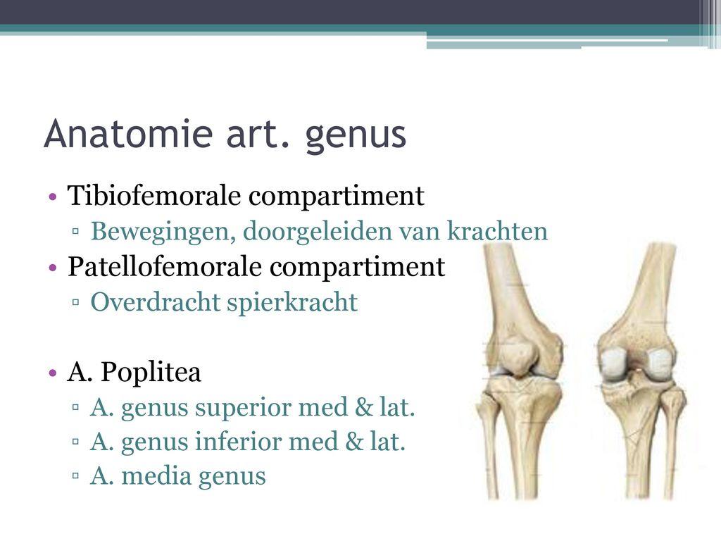 Atemberaubend Anatomie Des Kniebänder Ideen - Anatomie Ideen ...