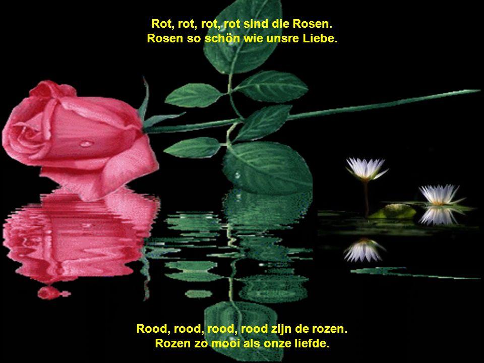 Rot, rot, rot, rot sind die Rosen. Rosen so schön wie unsre Liebe.