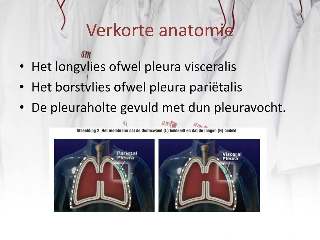 Ausgezeichnet Oberfläche Anatomie Der Lunge Und Der Pleura Bilder ...