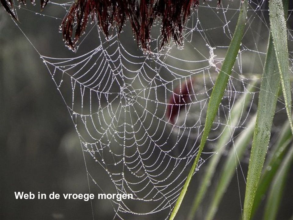 Web in de vroege morgen