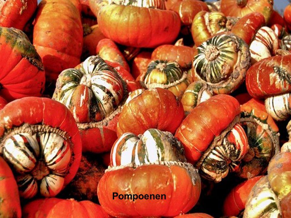 Pompoenen