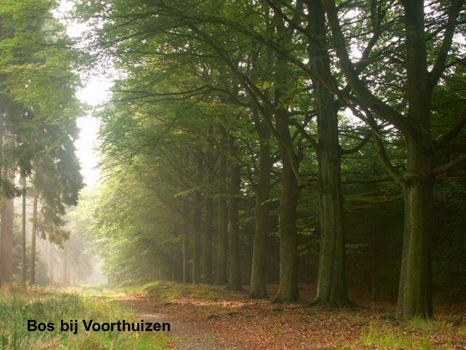 Bos bij Voorthuizen