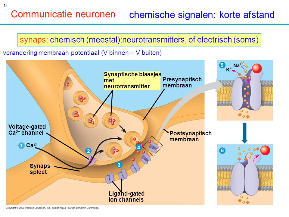Communicatie neuronen chemische signalen: korte afstand