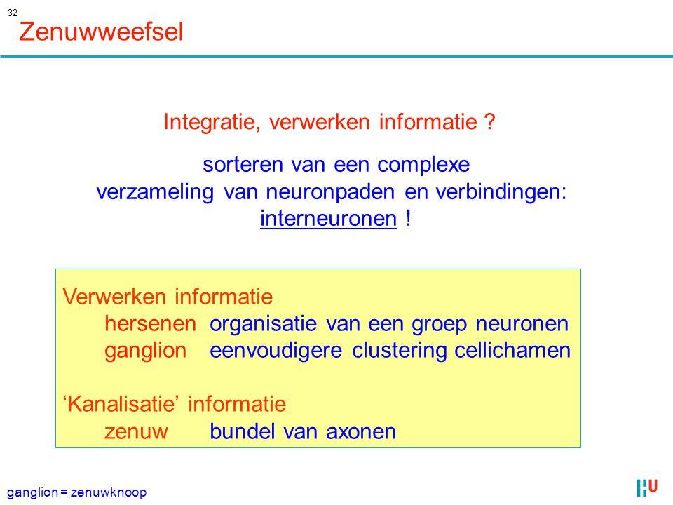 Zenuwweefsel Integratie, verwerken informatie