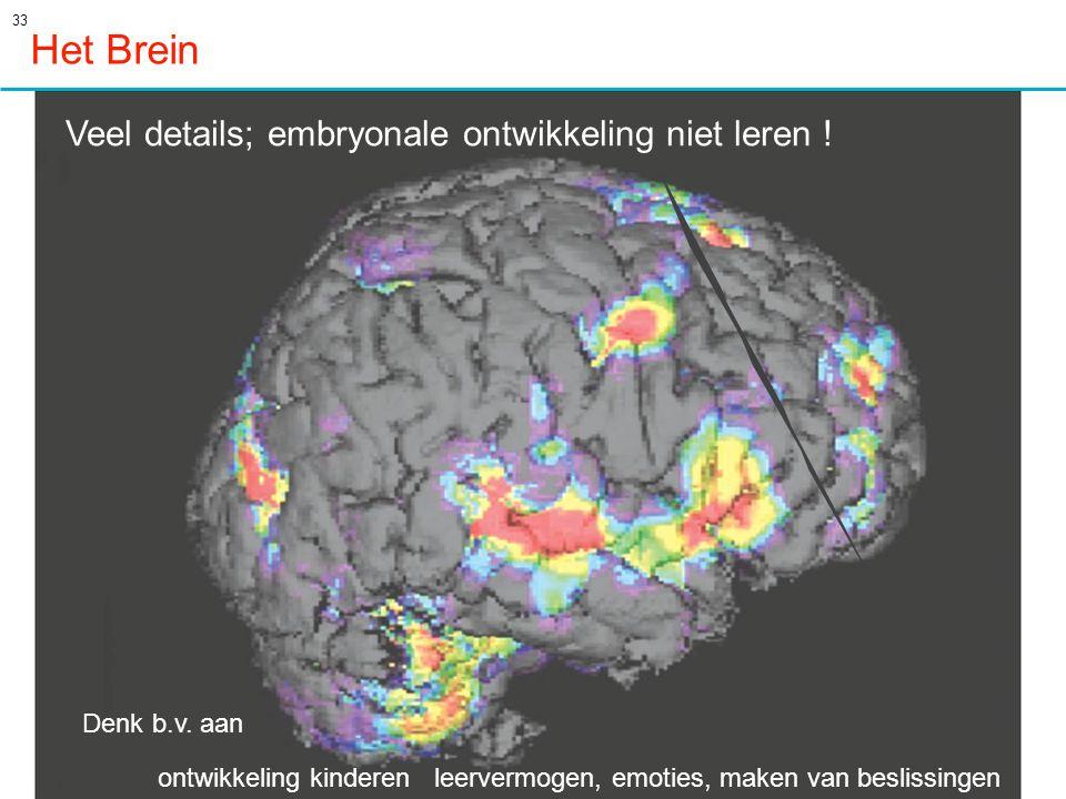 Het Brein Veel details; embryonale ontwikkeling niet leren !