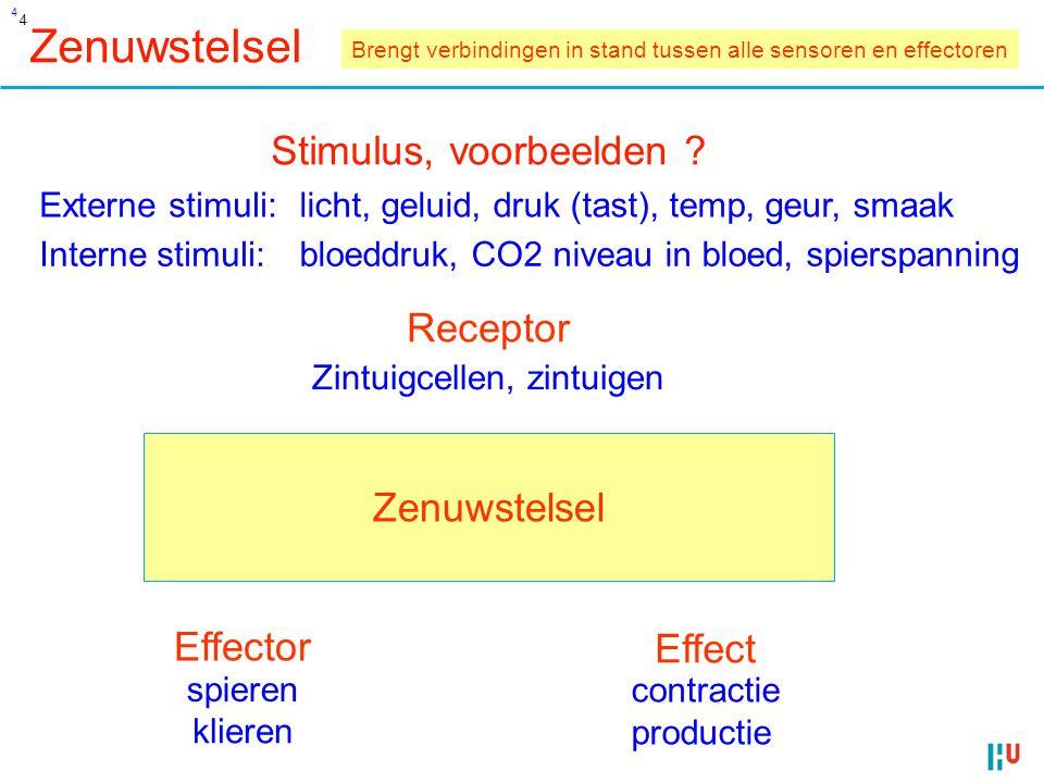 Zenuwstelsel Stimulus, voorbeelden Receptor Zenuwstelsel Effector