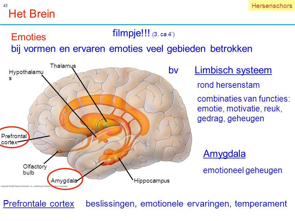 Het Brein filmpje!!! (3, ca 4') Emoties