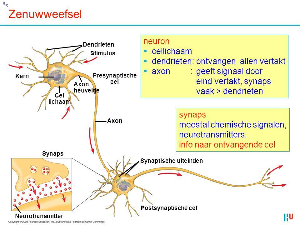 Zenuwweefsel neuron cellichaam dendrieten: ontvangen allen vertakt