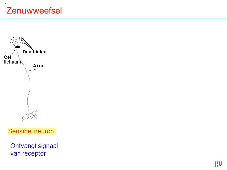 Zenuwweefsel Sensibel neuron Integreert signalen (hersenen ganglia)