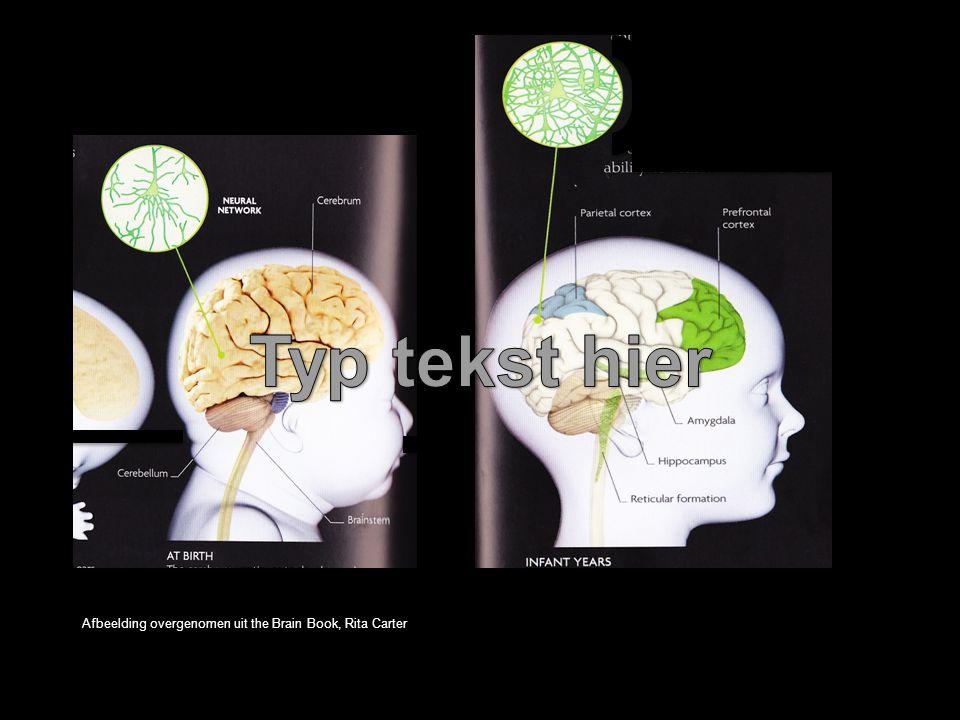 Typ tekst hier Afbeelding overgenomen uit the Brain Book, Rita Carter.