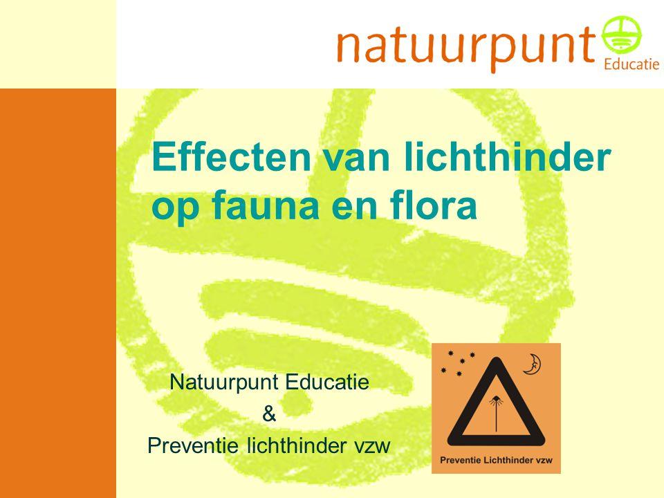 Effecten van lichthinder op fauna en flora