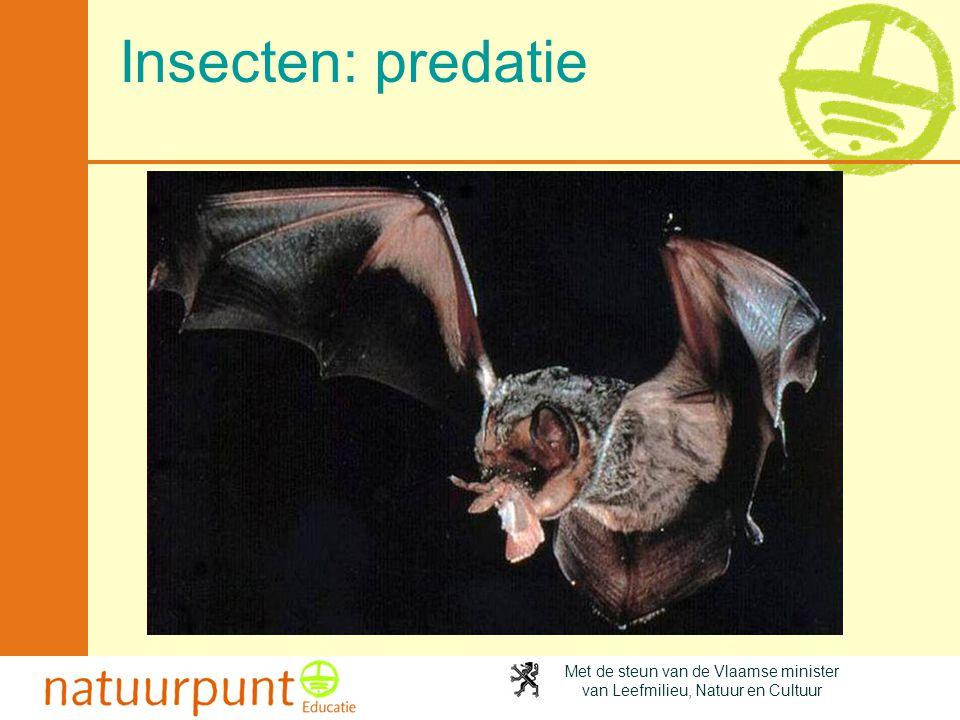 Insecten: predatie