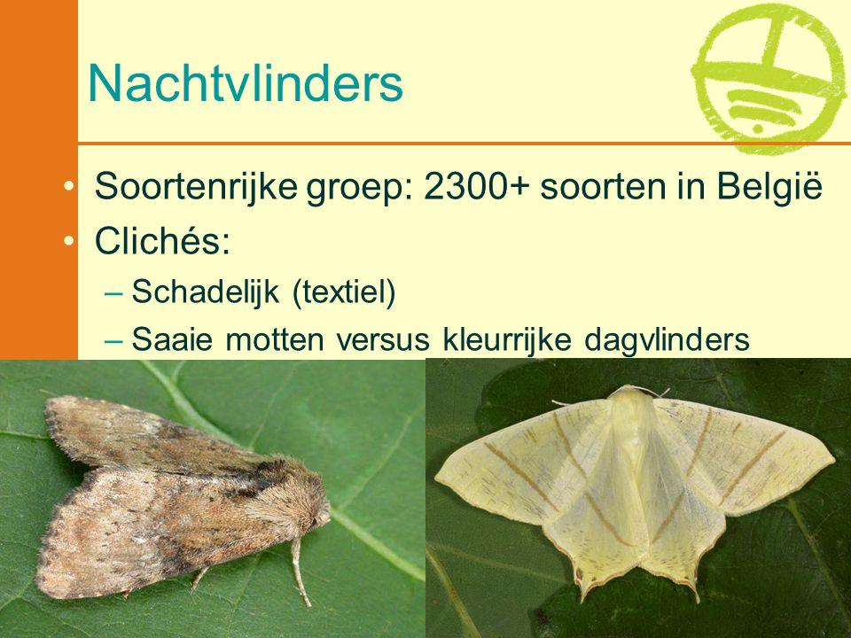 Nachtvlinders Soortenrijke groep: 2300+ soorten in België Clichés: